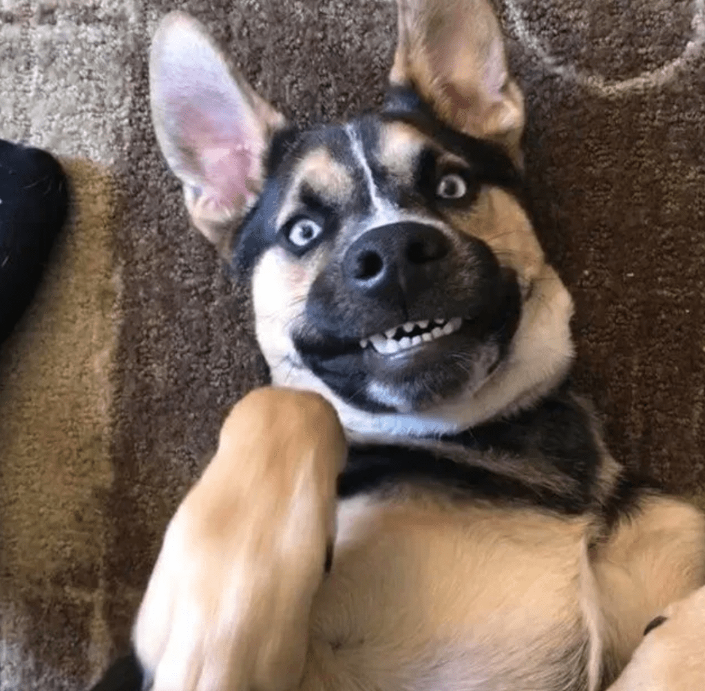 These Very Happy Dogs Should Put You in a Good Mood