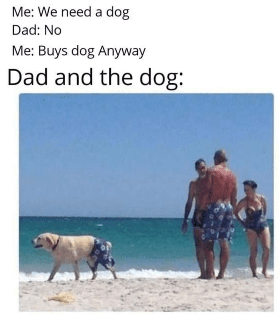 Wholesome Memes That Will a Little Sunshine to Your Life